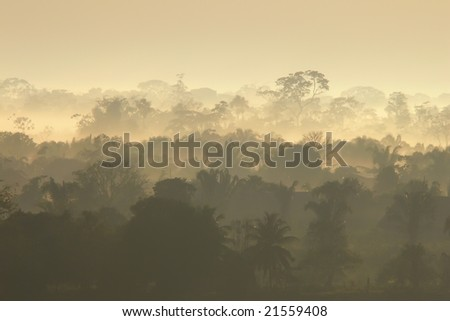 Tropical forest in Per? at sunrise - stock photo