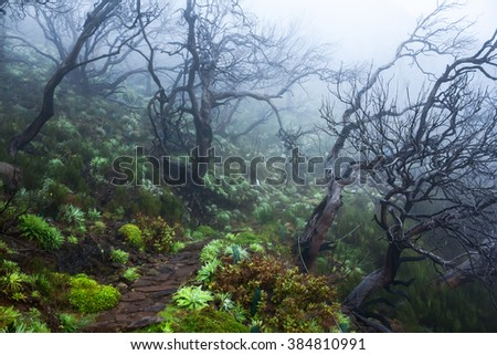 tropical forest in the fog, mysterious path in a foggy wood in madeira