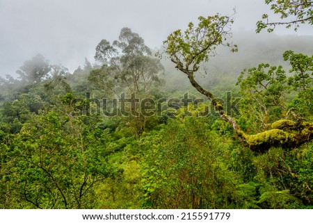Tropical forest in the mist, la Reunion island - stock photo