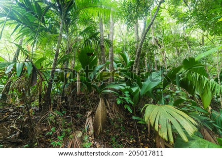 tropical forest in Valle de Mai, Praslin, Seychelles - stock photo