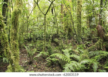 Tropical forest jungle, natural background