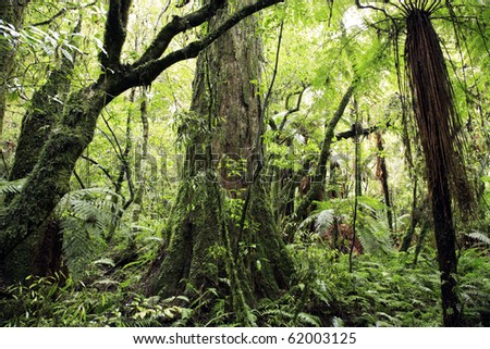 Tropical forest jungle, natural background - stock photo