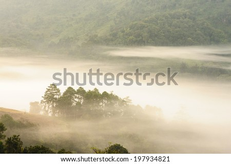 Tropical forest mist in thailand. - stock photo