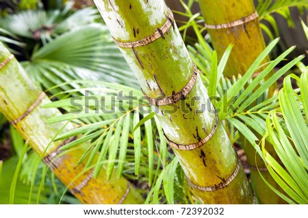 Tropical forest of palm trees in detail
