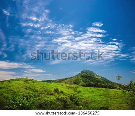 Tropical forest, palm trees in sunlight. Dominican Republic - stock photo