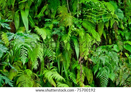tropical forest plants - stock photo