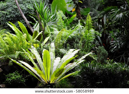 Tropical forest scene - stock photo