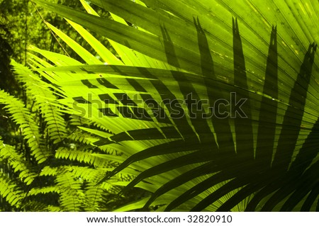 Tropical forest. Sun shining to the palm leaf in tropical forest. - stock photo