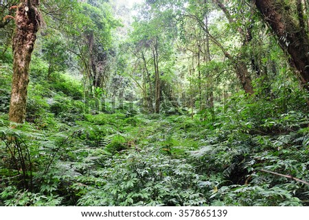 Tropical forest,The forests are abundant, Many kinds of trees in Kew Mae Pan Nature Trail, Doi Inthanon National Park, the highest point in Thailand - stock photo