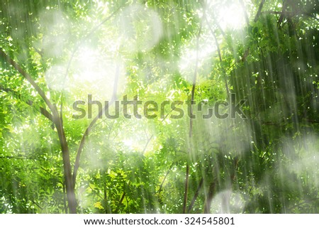 Tropical forest with shower raining in softly sunlight. - stock photo
