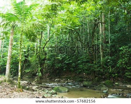 tropical forest with sunbeam - stock photo