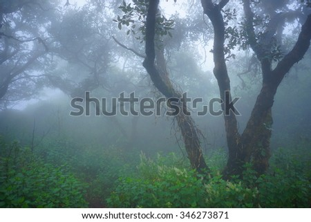 Tropical Forests in the Mist - stock photo