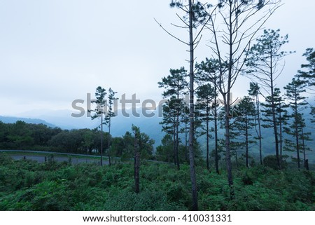 tropical forrest in the morning - stock photo