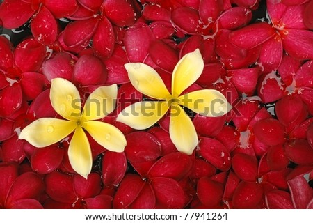 Tropical frangipani flowers in spa pool - stock photo