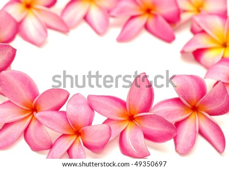 Tropical frangipani in a circle, empty space for text - stock photo