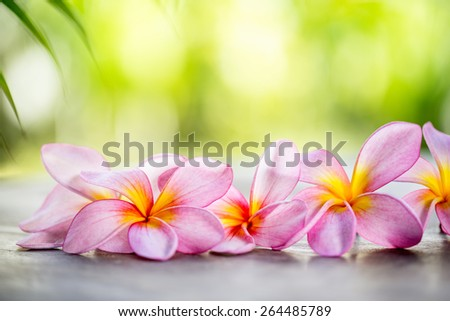 Tropical Frangipani on wooden table for spa and wellness concept - stock photo