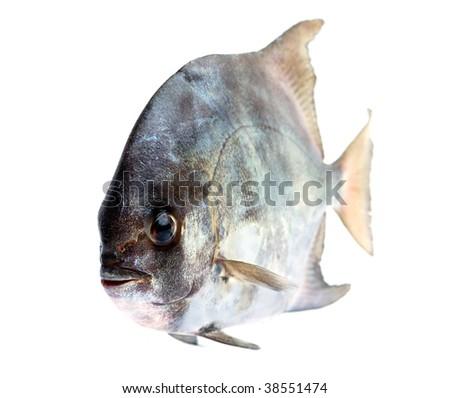 Tropical fresh fish on white background - stock photo