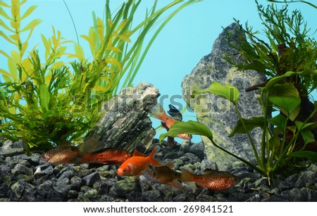Tropical freshwater aquarium with fishes - stock photo