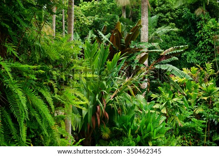 Tropical Garden, Cairns, Queensland, Australia - stock photo
