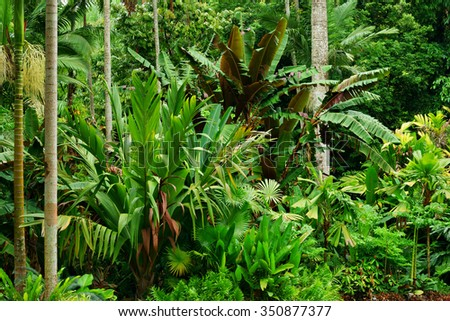 Tropical garden cairns queensland australia stock photo for Gardening tools brisbane