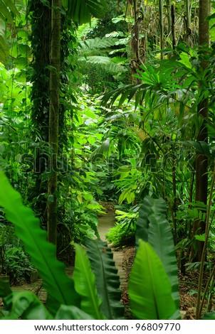 Tropical Garden in Cairns, North Queensland, Australia - stock photo