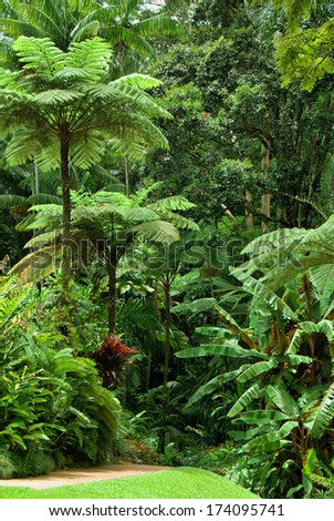 tropical garden in North Queensland, Australia - stock photo