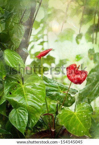 Tropical Garden in the Monsoon Rains - stock photo