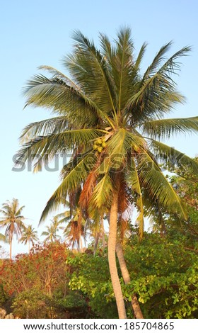 tropical garden with palm tree on a exotic island - stock photo