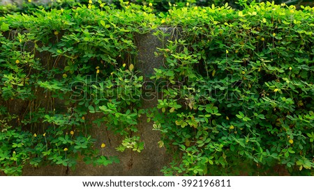 Tropical green foliage leafs and nature background.