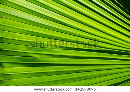 Tropical green leaf texture, abstract background - stock photo