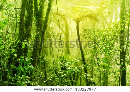 Tropical green mossy rainforest with mist and fog in early morning. - stock photo