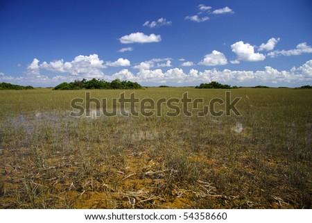 Tropical Hammocks, Everglades National Park - stock photo