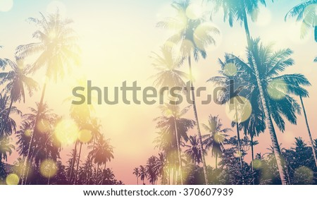 Tropical Hawaiian beach in sunset with coconut palm trees, panoramic view. Bokeh and vintage effect. - stock photo