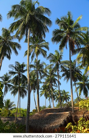tropical hut under tall coconut palms - stock photo