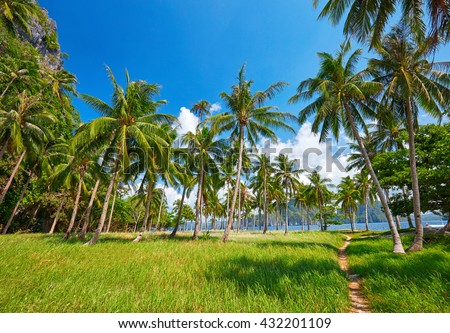 Tropical island with palm trees. Philippines - stock photo