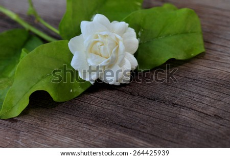 Tropical jasmine flower on wood.Jasmine flowers and leaves on old brown wooden table. - stock photo