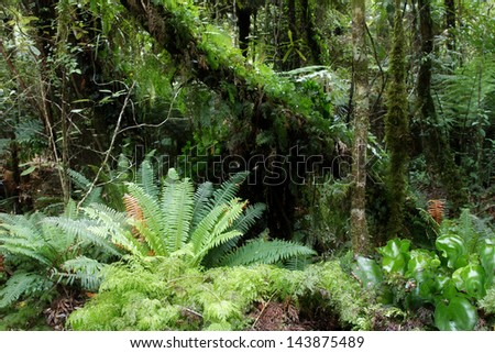 Tropical jungle forest. Natural background