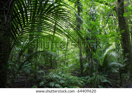 Tropical jungle forest.Natural background - stock photo