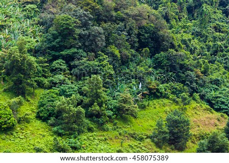 Tropical jungle hill slope 3
