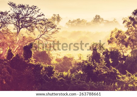 tropical jungle in Mexico - stock photo