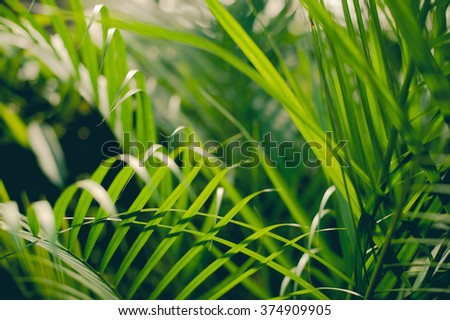 Tropical jungle undergrowth green palm leaves as background image - stock photo