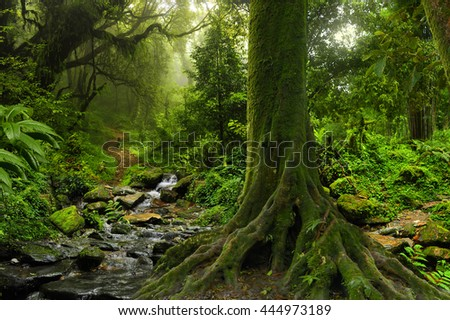 Tropical jungle with river - stock photo