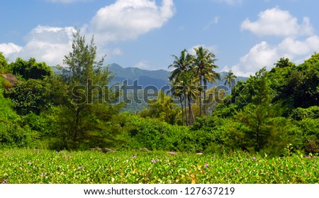 Tropical landscape near Palolem beach . South Goa. India