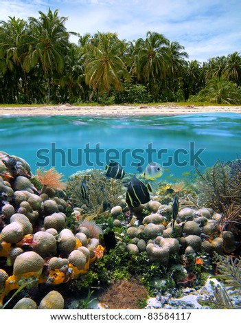 Tropical landscape of a sandy beach with coconut palm trees and under water surface beautiful coral reef with fish in the Caribbean sea, Panama - stock photo