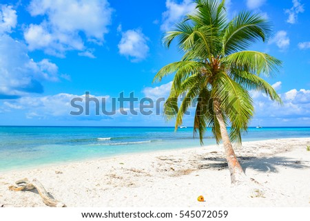 tropical landscape of the Caribbean Sea with white beach and almberi of coconut palm. Saona Island Dominican Republic