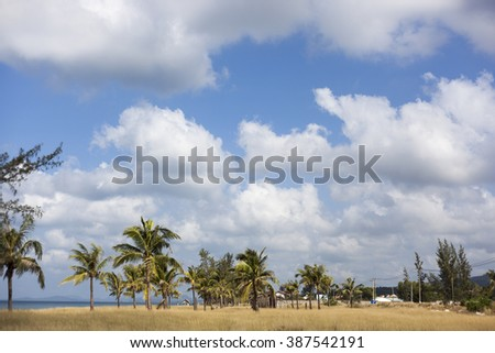 Tropical landscape with beach and palm trees
