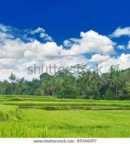 tropical landscape with green rice filed and blue cloudy sky
