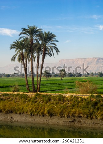Tropical landscape with palms and mountains on the bank of the Nile in Egypt. Agricultural landscape with green fields of the sugarcane in Africa. - stock photo