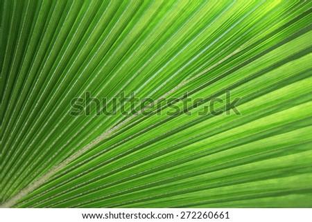 Tropical Leaf - stock photo