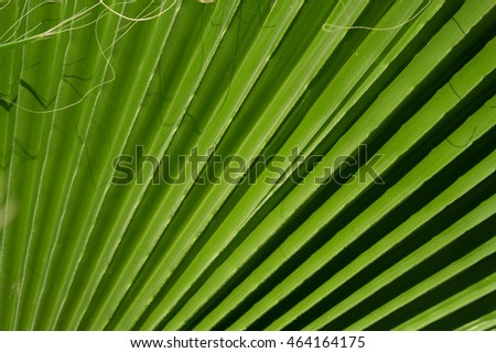 Tropical leaves. floral green background. Long strips and texture. Long shadows.